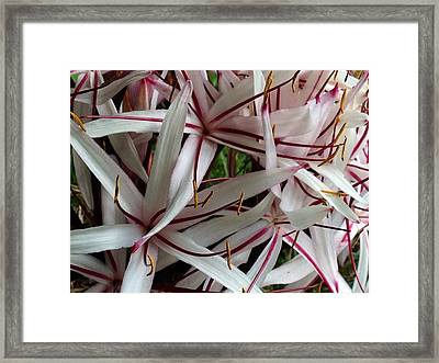 Framed Print featuring the photograph Lilies by Alohi Fujimoto