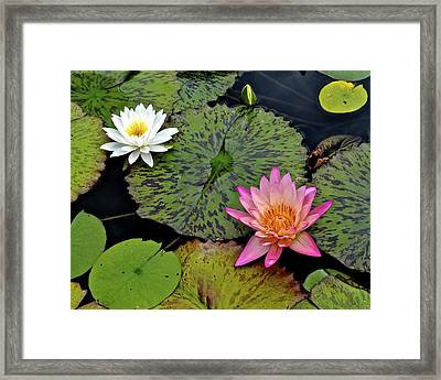 Lilies And Pads Framed Print