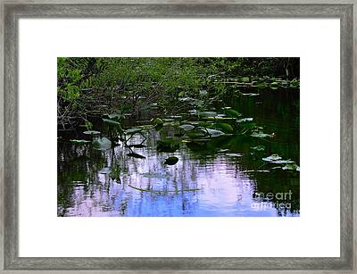 Lilies  Framed Print by Andres LaBrada
