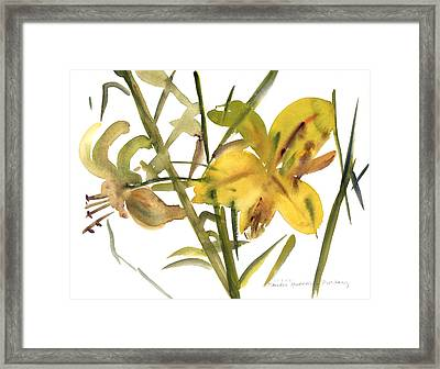 Lilies Framed Print by Claudia Hutchins-Puechavy