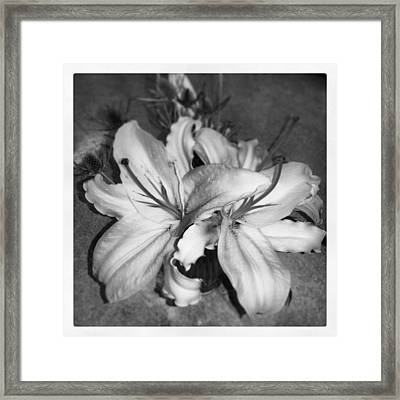 Lilies Framed Print by Heather L Wright