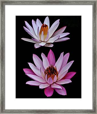 Lilies In Black Framed Print by Frozen in Time Fine Art Photography