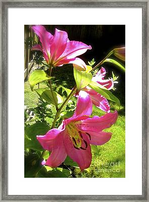 Lilies In The Garden Framed Print by Sher Nasser