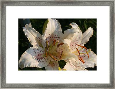 Lilies Framed Print by Kay Novy