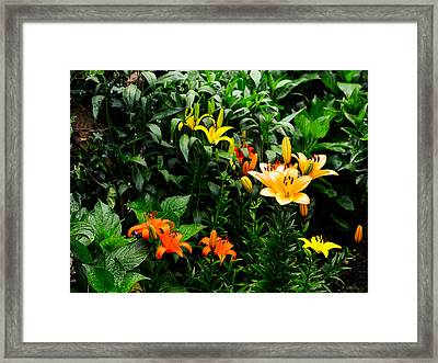 Lilies Framed Print by Marco Oliveira