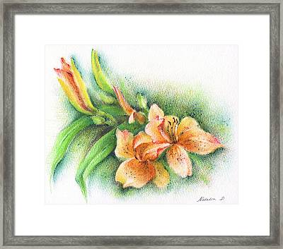 Framed Print featuring the drawing Lilies by Natasha Denger