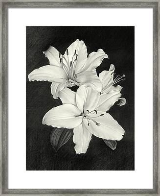 Lilies Framed Print by Nicola Butt