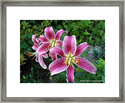 Framed Print featuring the photograph Lilies Of The Field by Lingfai Leung
