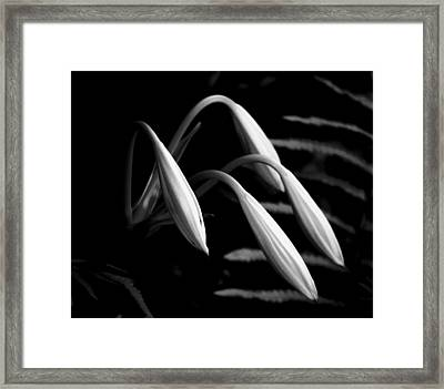 Lilies Of The Marsh B/w Framed Print