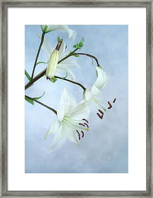 Framed Print featuring the photograph Lilies On Blue by Louise Kumpf