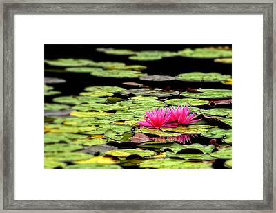 Lilies On Lake Hope Framed Print by Dick Wood