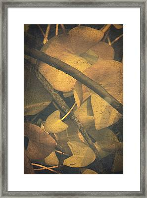 Lilies Under Water Framed Print