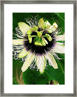 Lilikoi Flower Framed Print by James Temple