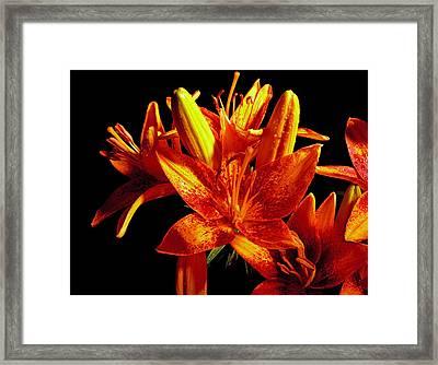 Lilium  After The Rain Framed Print by Susan Duda