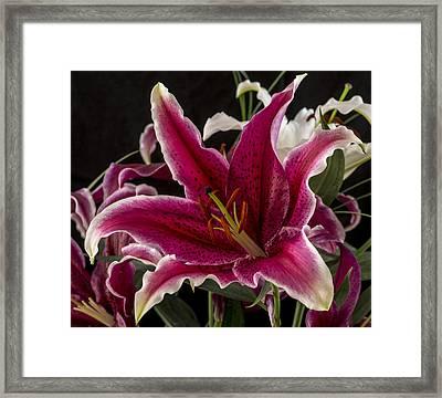 Lilium Framed Print