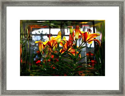 Lilium Framed Print by Nigel Watts