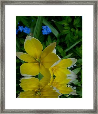 Lilium Of Gold Framed Print by Pepita Selles