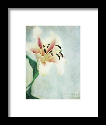 Lilly Framed Prints