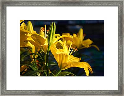 Lillies Of Gold Framed Print by Billie Colson
