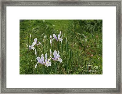 Lillies Of The Field Framed Print by Jennifer Apffel