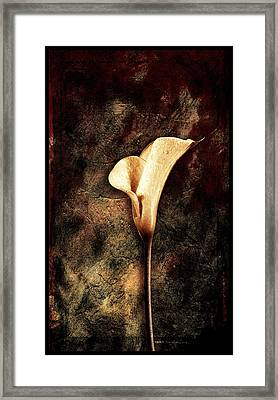 Lilly 2 Framed Print by Mauro Celotti