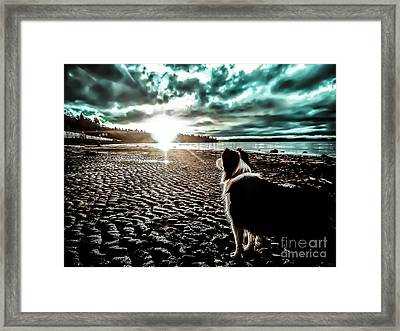 Lilly And The Sun Framed Print