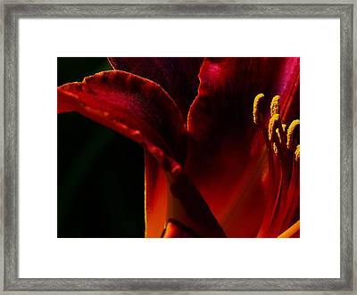 Lilly Edge Framed Print by Camille Lopez