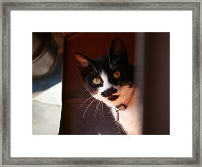 Framed Print featuring the photograph Lilly by Evelyn Tambour