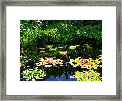 Lilly Garden Framed Print by Carey Chen