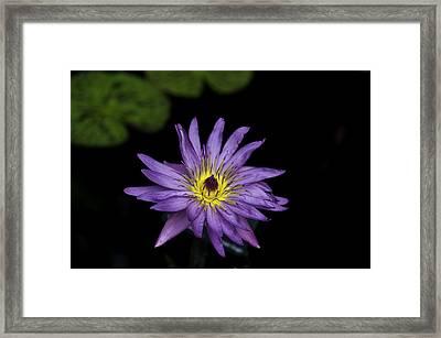 Lilly Glow Framed Print