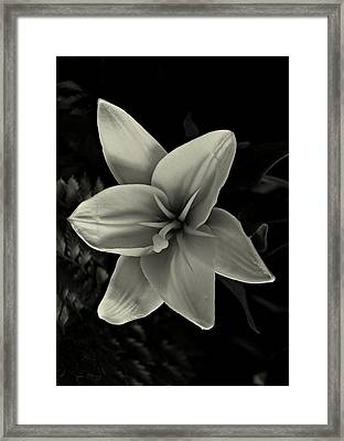 Lilly In Black And White Framed Print