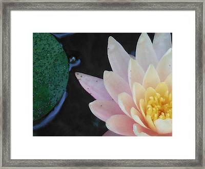 Lilly Framed Print by Lori Thompson