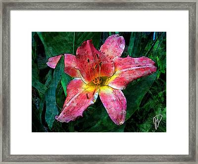 Lilly Of The Rain Framed Print