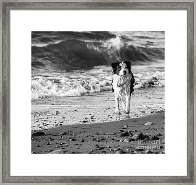 Lilly On The Beach Framed Print