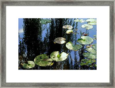 Lilly Pad Reflection Framed Print by Frozen in Time Fine Art Photography
