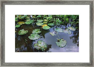 Lilly Pad Reflections Framed Print