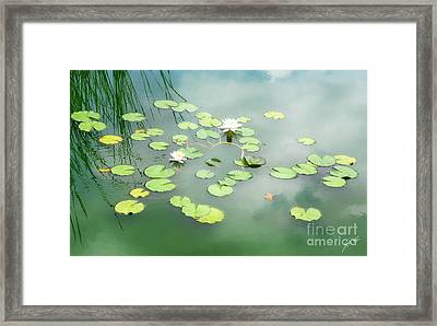 Framed Print featuring the photograph Lilly Pads by Erika Weber