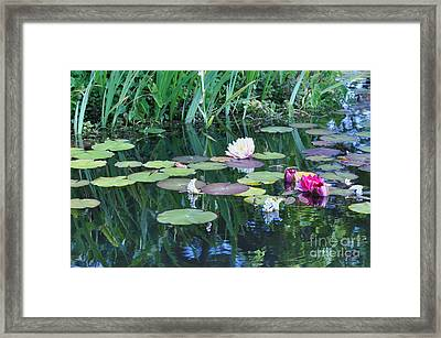 Lilly Pond At Mission San Juan Capistrano Framed Print by Debby Pueschel