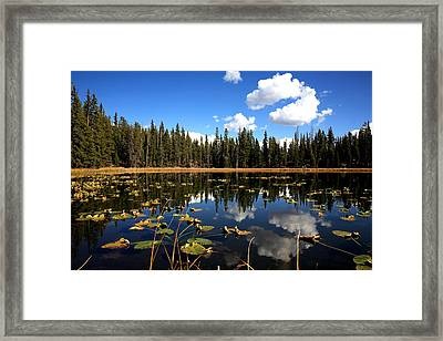 Lilly Pond Framed Print