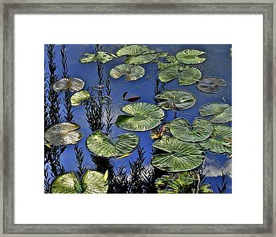 Lilly Pond Framed Print by Frozen in Time Fine Art Photography