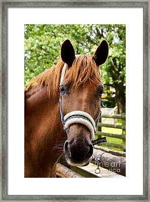 Lilly Portrait Framed Print by Angela Doelling AD DESIGN Photo and PhotoArt