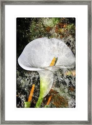Lilly Splash Framed Print by Davina Washington