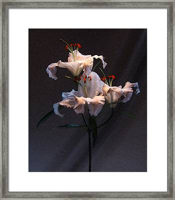 Framed Print featuring the photograph Lilly Variation #02 by Richard Wiggins