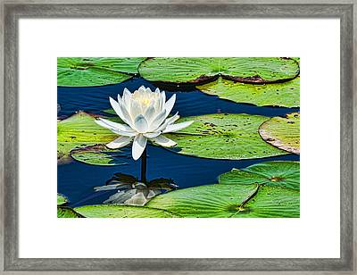 Lilly White Framed Print by Frank Feliciano