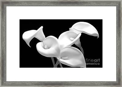 Lily 1 Framed Print by Rich Killion