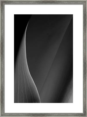 Lily 3 Framed Print by Joe Kozlowski