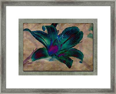 Lily 9 Framed Print by WB Johnston