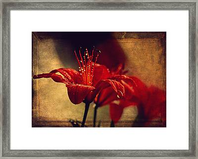 Lily After The Rain  Framed Print by Maria Angelica Maira