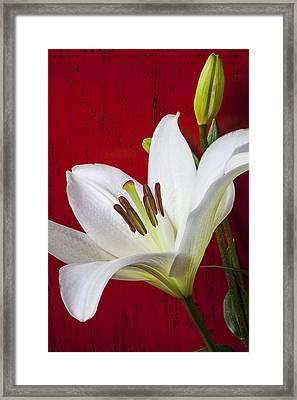 Lily Against Red Wall Framed Print by Garry Gay