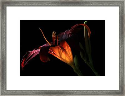 Framed Print featuring the photograph Lily Ambiance by Donna Kennedy